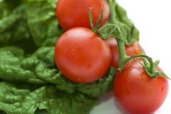 ντομάτες σπανακιού Στοκ φωτογραφία με δικαίωμα ελεύθερης χρήσης