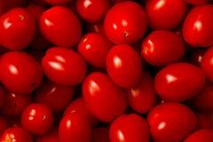 ντομάτες σταφυλιών Στοκ φωτογραφία με δικαίωμα ελεύθερης χρήσης