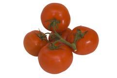ντομάτες σταφυλιών στοκ εικόνα