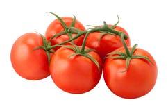 Ντομάτες στην άμπελο Στοκ Εικόνα