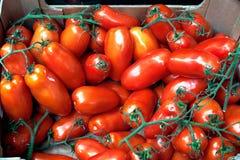 Ντομάτες στην επίδειξη στην αγορά δήμων Στοκ φωτογραφίες με δικαίωμα ελεύθερης χρήσης