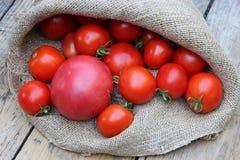 Ντομάτες στην τσάντα Στοκ φωτογραφία με δικαίωμα ελεύθερης χρήσης