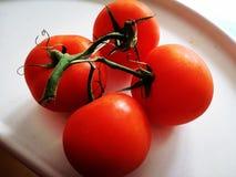 Ντομάτες στο άσπρο υπόβαθρο Στοκ εικόνες με δικαίωμα ελεύθερης χρήσης