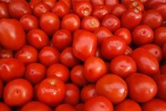 Ντομάτες της Ρώμης Στοκ Εικόνα