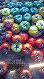 Ντομάτες των διάφορων χρωμάτων και της ωρίμανσης και της γήρανσης απεικόνιση αποθεμάτων