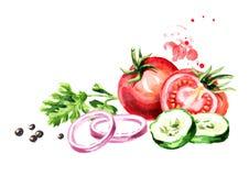 Ντομάτες φρέσκων λαχανικών, αγγούρι, κρεμμύδι, μαϊντανός, κορίανδρο, cilantro, πιπέρι Συρμένη χέρι απεικόνιση Watercolor, που απο απεικόνιση αποθεμάτων