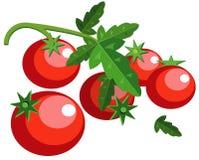 ντομάτες φύλλων Στοκ φωτογραφία με δικαίωμα ελεύθερης χρήσης