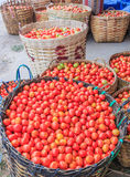Ντομάτες Στοκ Εικόνα