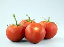 Ντομάτες Στοκ εικόνες με δικαίωμα ελεύθερης χρήσης