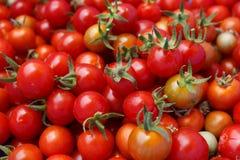 Ντομάτες Cherrys Στοκ φωτογραφίες με δικαίωμα ελεύθερης χρήσης