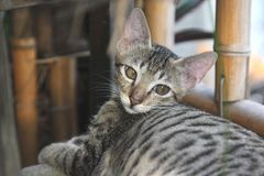 Ντροπαλή γάτα στοκ φωτογραφίες με δικαίωμα ελεύθερης χρήσης