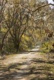Ντυμένα δέντρα βρύου στο εθνικό καταφύγιο άγριας πανίδας λαιμών Harris, Georg Στοκ εικόνες με δικαίωμα ελεύθερης χρήσης