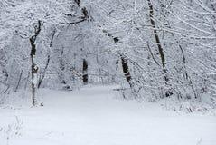 ντυμένα δέντρα χιονιού Στοκ Εικόνα