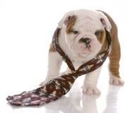 ντυμένος σκυλί δεσμός ατό&m στοκ φωτογραφίες