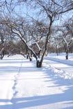 ντυμένο δέντρο χιονιού Στοκ Φωτογραφίες