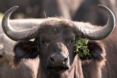 Ντυμένο κορίτσι Buffalo Στοκ φωτογραφία με δικαίωμα ελεύθερης χρήσης