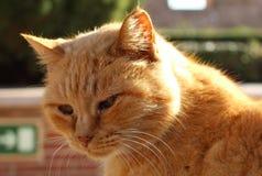 Νυσταλέα γάτα στα σκαλοπάτια στοκ εικόνες