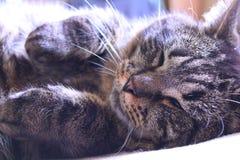 Νυσταλέα γάτα στοκ φωτογραφίες