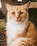 Νυσταλέο γατάκι σε μια λεκάνη στοκ εικόνα