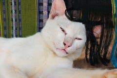 Νυσταλέα γάτα με το μετάξι στο υπόβαθρο Στοκ Εικόνα
