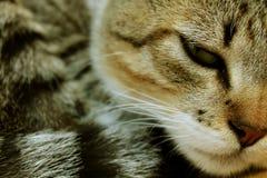 Νυσταλέα γάτα που στηρίζεται, καλό γατάκι Στοκ Φωτογραφίες