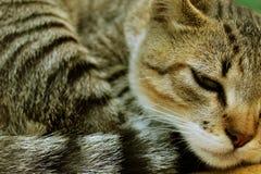 Νυσταλέα γάτα που στηρίζεται, καλό γατάκι Στοκ Φωτογραφία