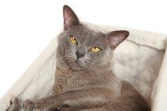 Νυσταλέα γάτα σε ένα καλάθι Στοκ φωτογραφία με δικαίωμα ελεύθερης χρήσης