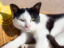 Νυσταλέα γάτα Στοκ φωτογραφία με δικαίωμα ελεύθερης χρήσης