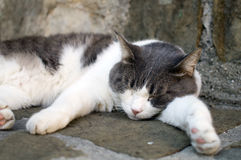 Νυσταλέα γάτα (2) στοκ εικόνες