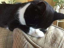 Νυσταλέα γάτα στοκ εικόνες με δικαίωμα ελεύθερης χρήσης