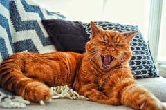 Νυσταλέα γάτα στοκ εικόνα με δικαίωμα ελεύθερης χρήσης