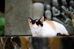 νυσταλέα ταϊλανδική γάτα στοκ εικόνα με δικαίωμα ελεύθερης χρήσης