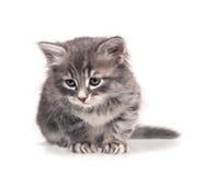 Νυσταλέο γατάκι Στοκ εικόνα με δικαίωμα ελεύθερης χρήσης