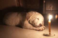 Νυσταλέο κουτάβι κάτω από το φως κεριών Στοκ Φωτογραφίες
