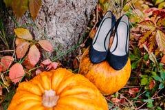 Νυφικά παπούτσια με τις κολοκύθες φθινοπώρου Γαμήλιες διακοσμήσεις Στοκ Εικόνες