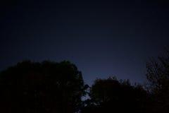 Νυχτερινός ουρανός με την ελαφριά πυράκτωση πόλεων πέρα από τα δέντρα σκιαγραφιών στοκ εικόνα