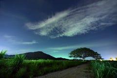 Νυχτερινός ουρανός με το γαλακτώδη τρόπο πέρα από το δάσος και τα δέντρα Στοκ φωτογραφίες με δικαίωμα ελεύθερης χρήσης
