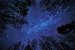 Νυχτερινός ουρανός με το γαλακτώδη τρόπο πέρα από το δάσος και τα δέντρα που περιβάλλουν τη σκηνή Στοκ Εικόνες
