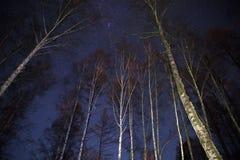 Νυχτερινός ουρανός πέρα από το υπόβαθρο δέντρων Στοκ Εικόνα