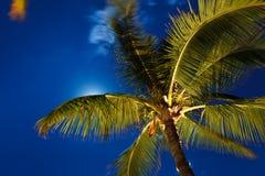 νυχτερινός ουρανός τροπι στοκ εικόνες