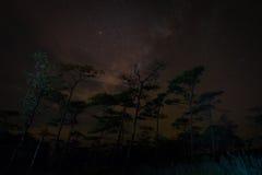 Νυχτερινός ουρανός τρόπων γάλακτος πέρα από τα δέντρα πεύκων Στοκ Φωτογραφία