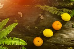 Νωποί καρποί, διάφορα φρούτα, υγιή τρόφιμα, ξύλινος πίνακας, υπόβαθρο Bokeh στοκ φωτογραφίες