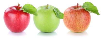 Νωποί καρποί μήλων φρούτων της Apple κόκκινο σε έναν πράσινο σειρών που απομονώνεται στο W Στοκ Εικόνες