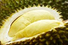 Νωποί καρποί, Durian Στοκ εικόνες με δικαίωμα ελεύθερης χρήσης