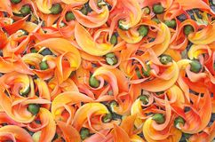 Νόθα teak λουλούδια Στοκ Εικόνες