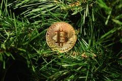 Νόμισμα bitcoin στο νέο δέντρο έτους Στοκ Εικόνα