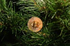 Νόμισμα bitcoin στο νέο δέντρο έτους Στοκ Φωτογραφίες