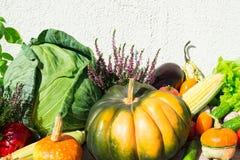 Νόστιμα φρέσκα λαχανικά φθινοπώρου με τα χορτάρια και το μαρούλι Στοκ Εικόνες