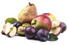 Νόστιμα ώριμα μήλα φθινοπώρου με τα δαμάσκηνα και ένα μεγάλο αχλάδι Στοκ εικόνες με δικαίωμα ελεύθερης χρήσης