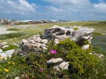 νότια άκρη της Αφρικής Στοκ εικόνα με δικαίωμα ελεύθερης χρήσης
